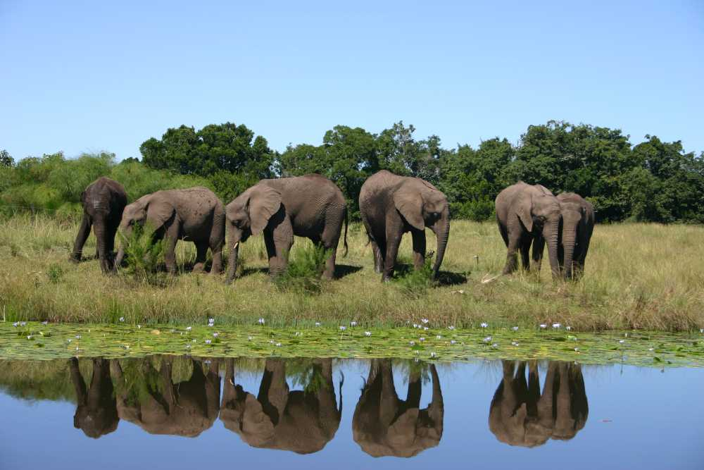 garden route -elephants