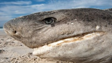 5 dead sharks on Betty's Bay beach